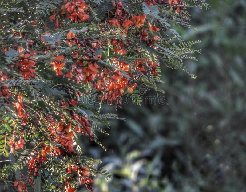 Красные цветы цветут природа на открытом воздухе зеленые деревья растения ботанический парк стоковое фото