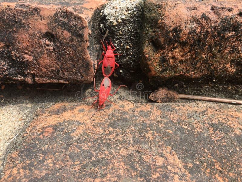 Красные черепашки стоковые фотографии rf