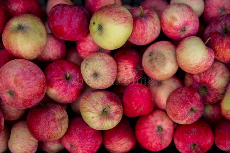 Красные экологические яблоки стоковая фотография rf