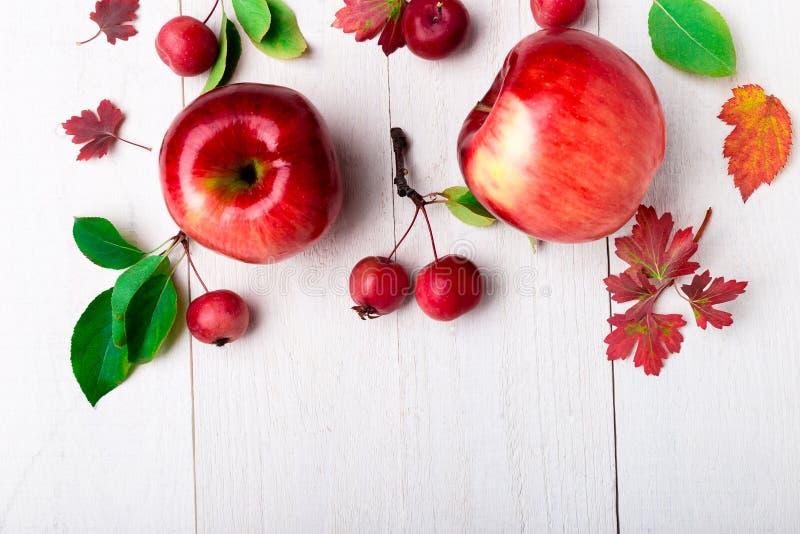 Красные яблоки большие и малые на белой деревянной предпосылке Рамка белизна осени изолированная принципиальной схемой Взгляд све стоковые изображения rf