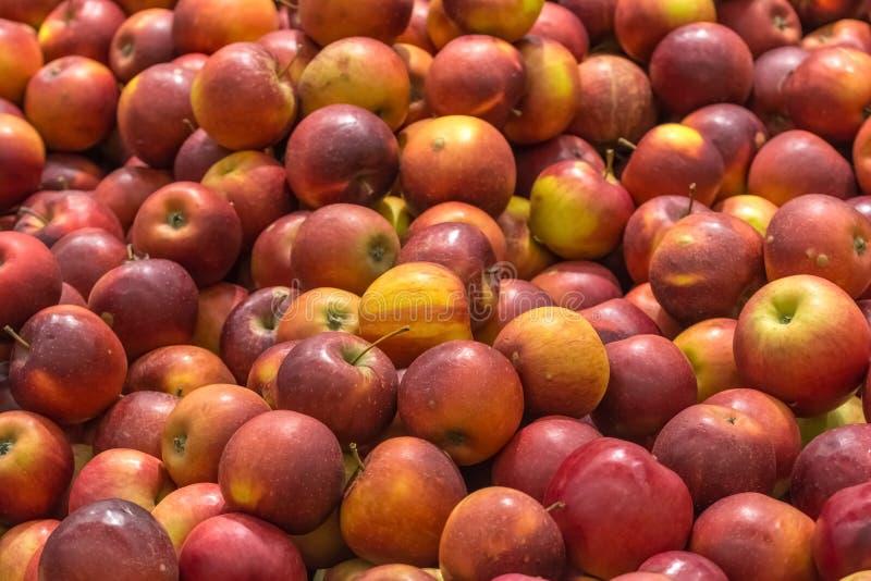 Красные яблоки в дисплее рынка плодоовощ стоковые фотографии rf