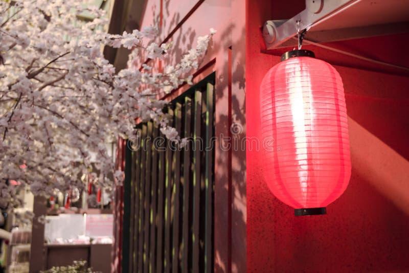 Красные японские фонарики с деревом Сакуры стоковое фото rf