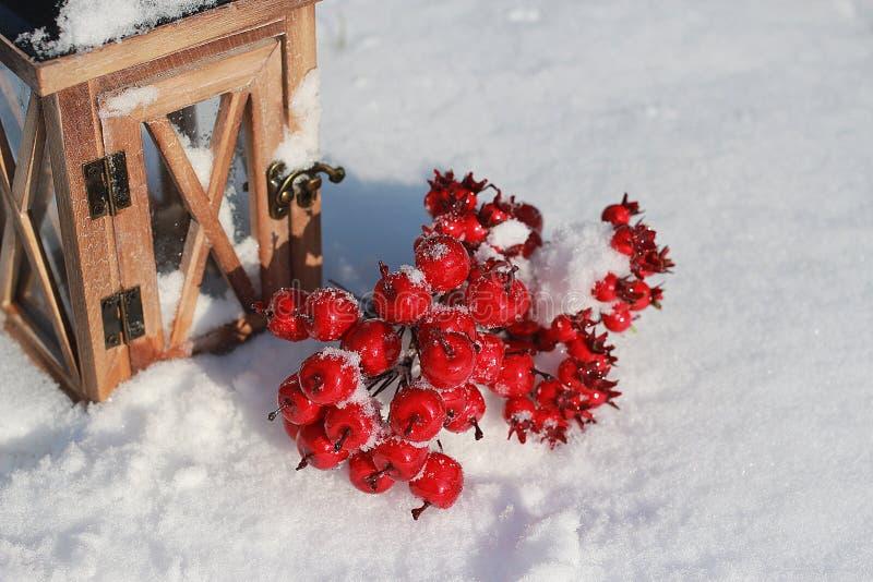 Красные crabapples в снеге стоковое изображение rf