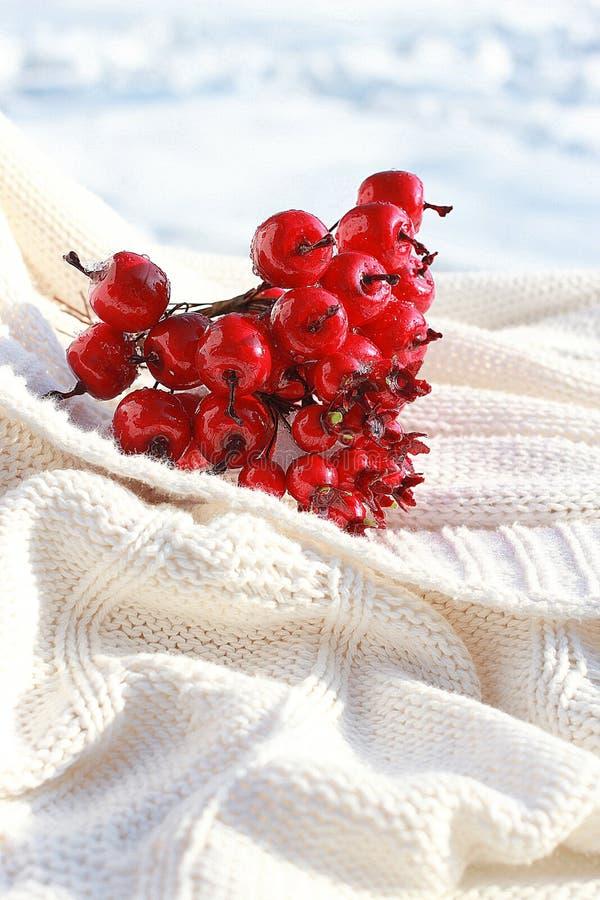 Красные crabapples стоковые фото