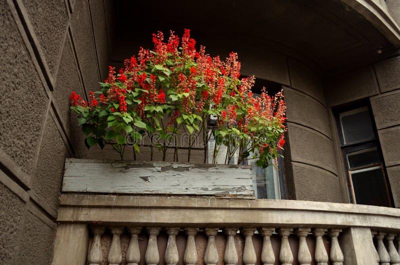 Красные flowerrs стоковое фото