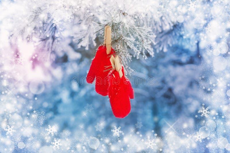Красные mittens на сосне зимы стоковые изображения rf