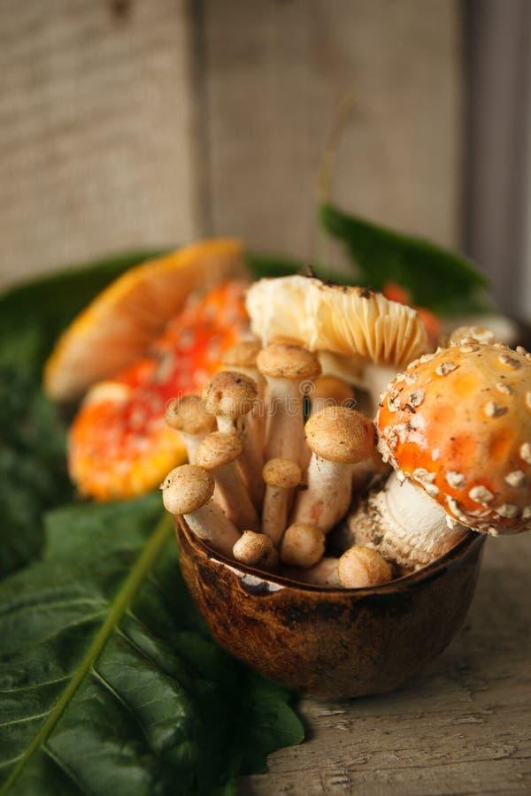 Красные muscaria мухомора и мед пластинчатого гриба в чашке, psychodelic токсическом десерте стоковое фото rf