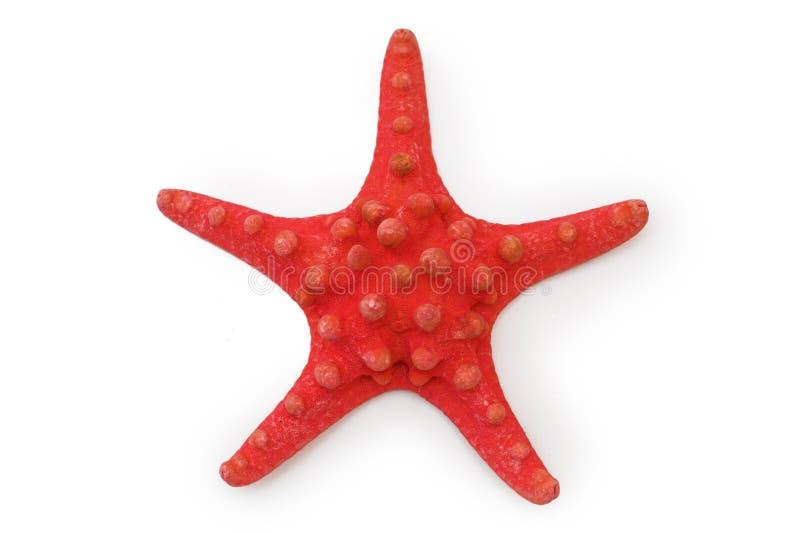 красные starfish стоковая фотография