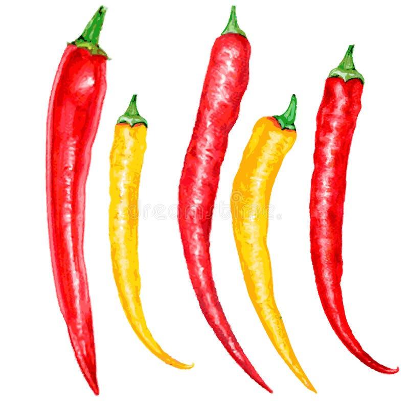 Красный акварели свежий, желтый перец chili изолированный на белой предпосылке, руке нарисованная иллюстрация вектора, варя иллюстрация штока