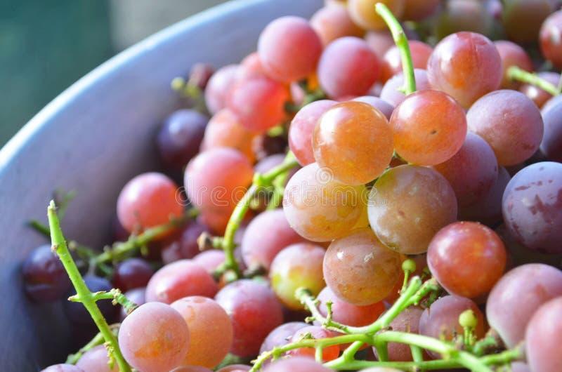 Красный виноград, фон Осень Урожай виноградников стоковое фото rf