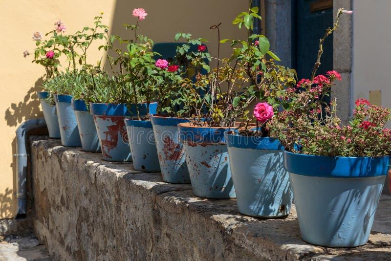 Красный гераниум и розовые цветки роз: Заводы внутри голубых ваз стоковая фотография rf
