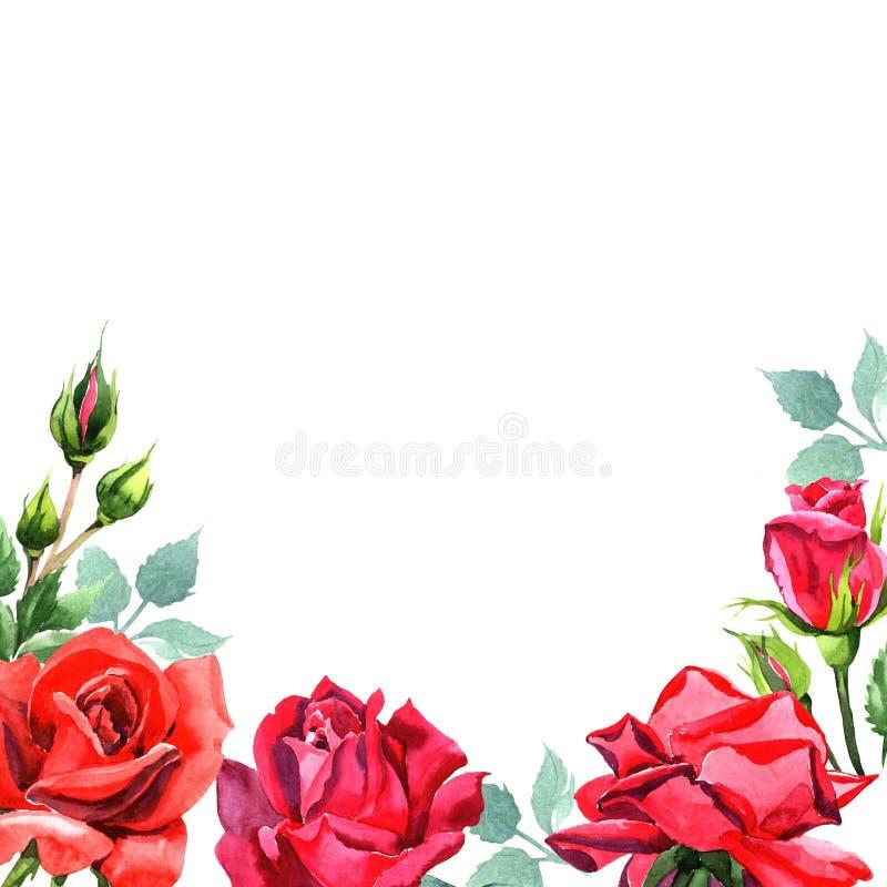 Красный гибрид поднял Флористический ботанический цветок Квадрат орнамента границы рамки иллюстрация штока