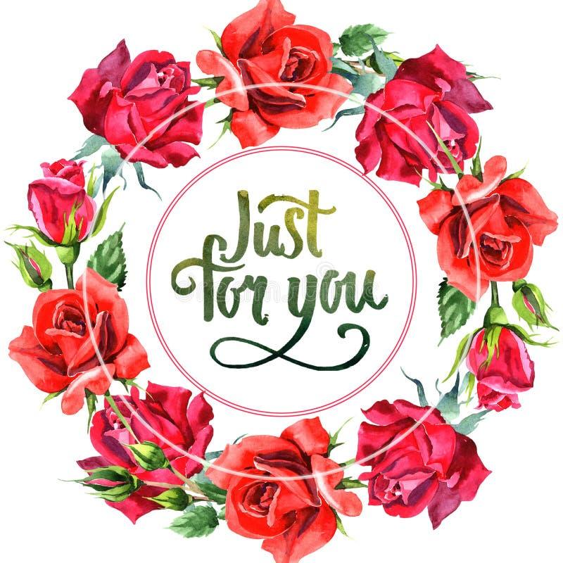 Красный гибрид поднял Флористический ботанический цветок Квадрат орнамента границы рамки иллюстрация вектора