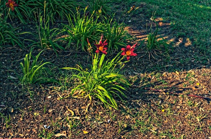 Красный завод цветков с зеленым оттенком стоковое изображение rf