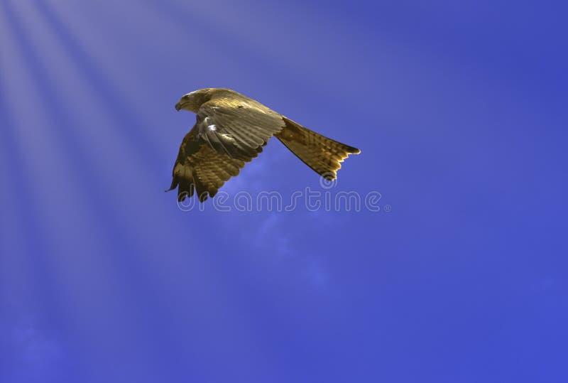 Красный змей летая в Warwick, Великобритании стоковое изображение