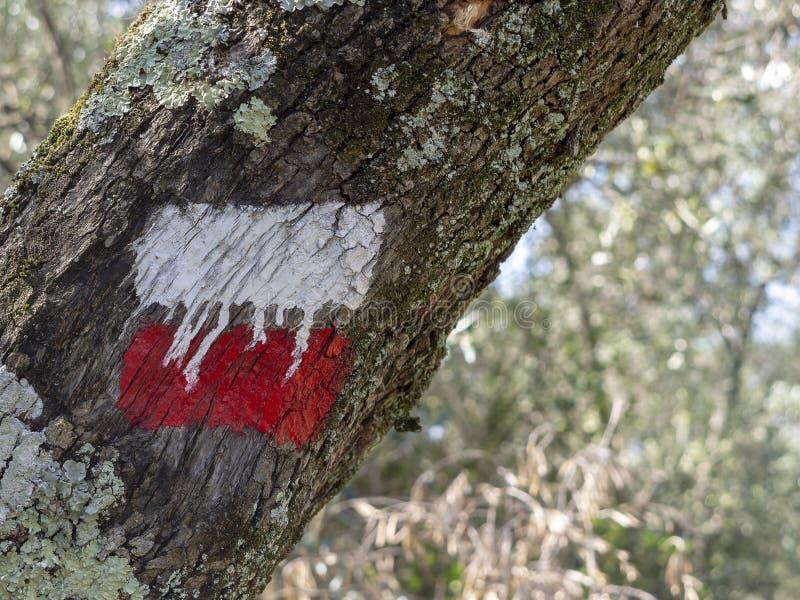 Красный и белый знак пешей тропы на дереве для ходоков и trekking для указания пути Предпосылка Defocussed стоковое изображение