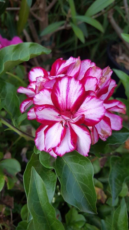 Download Красный и белый маленький цветок Стоковое Изображение - изображение насчитывающей цветок, немного: 83318067