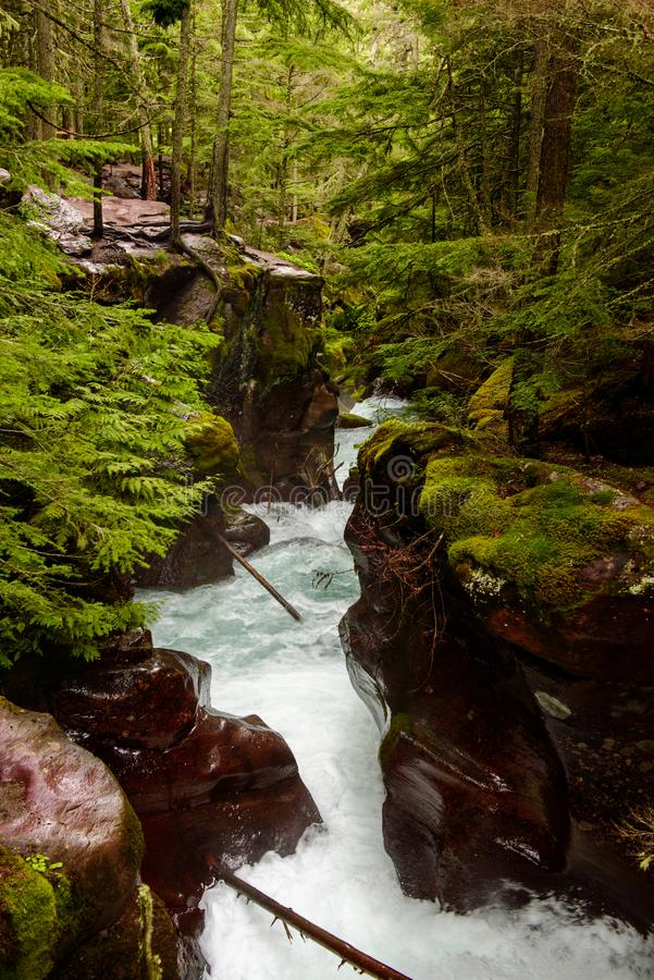Красный каньон заводи лавины вдоль кедров отстает стоковые фото