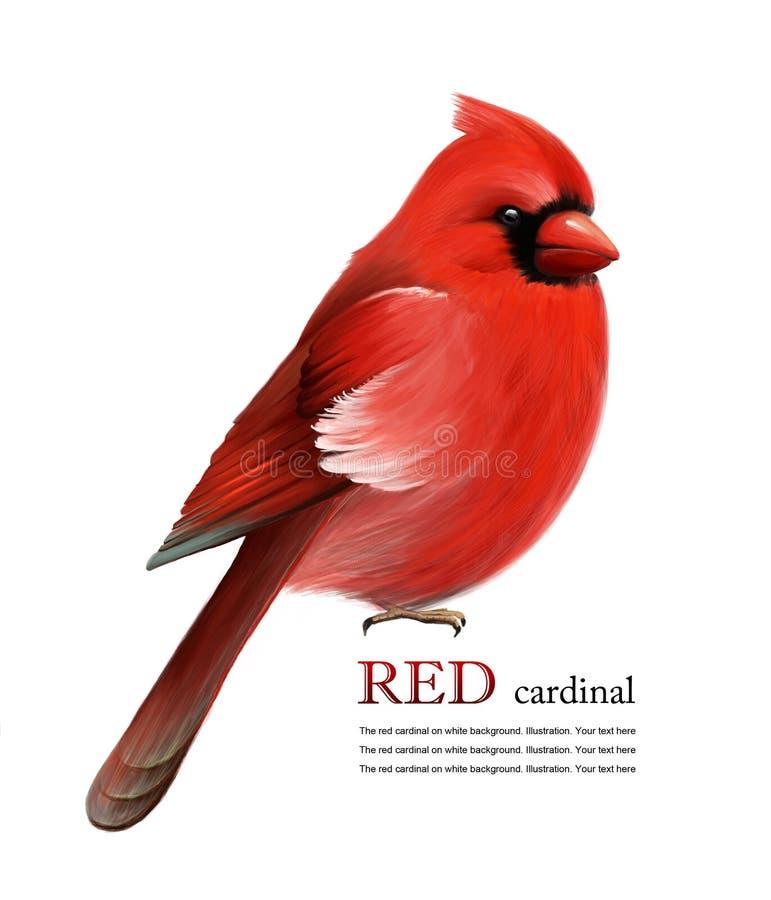Красный кардинал иллюстрация штока