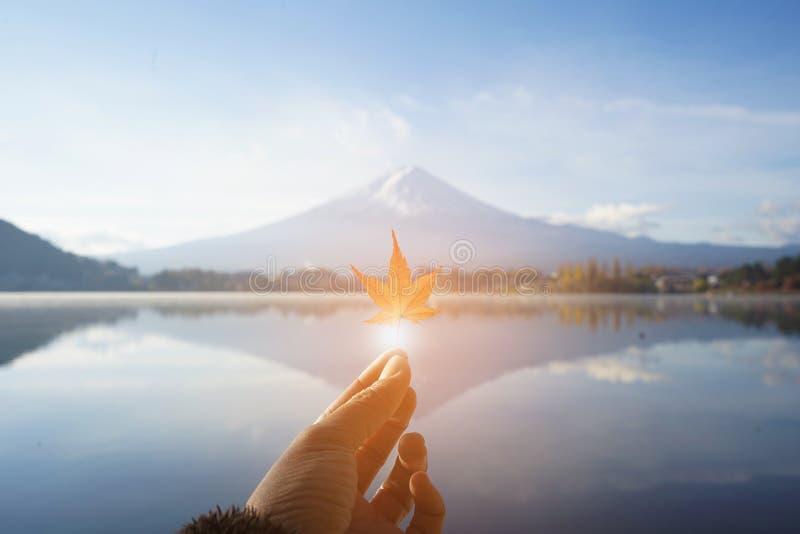 Красный кленовый лист на пальце с Mt предпосылка Фудзи с красивым светом в Японии стоковое изображение rf