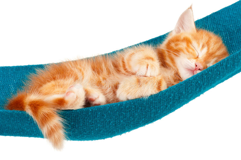 Красный котенок стоковые изображения rf