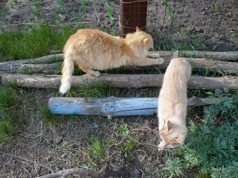 Красный кот стоковое изображение