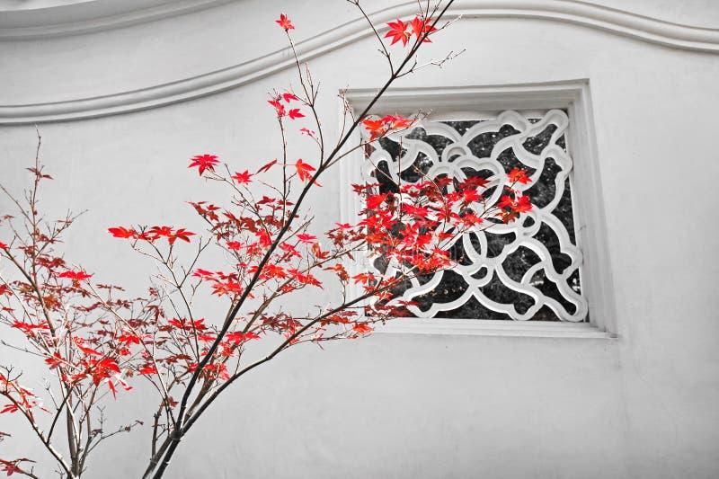 Красный клен стоковая фотография rf