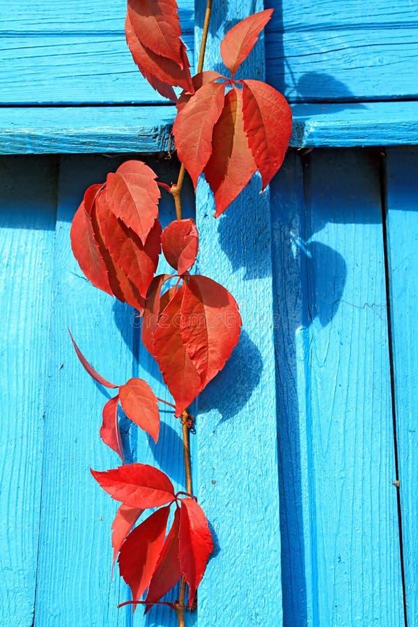 красный лист стоковые фото