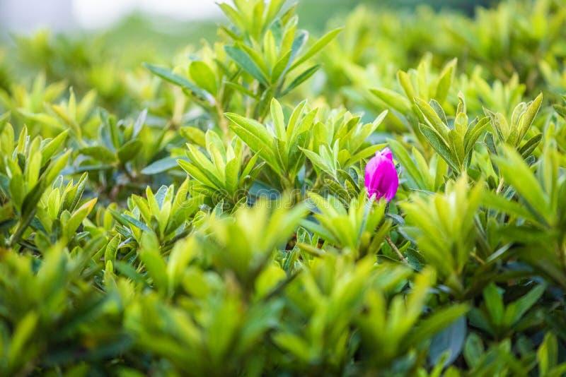 Красный лучший из лучших цветка от травы стоковая фотография