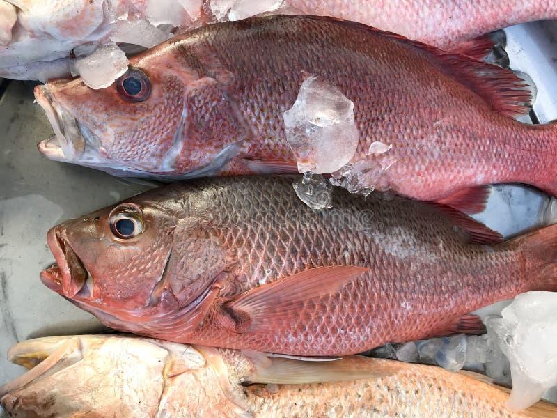 Красный люциан свежих рыб положил дальше лед в рынок стоковые изображения