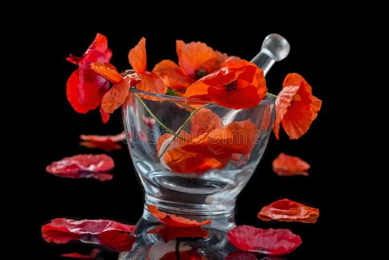Красный мак в стеклянном миномете для предпосылки фитотерапии и эфирного масла черной стоковые фото