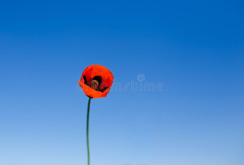 Download Красный мак против голубого неба Стоковое Фото - изображение насчитывающей цвет, красно: 41660984