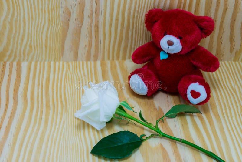Красный медведь с цветком белых роз влюбленности стоковое изображение