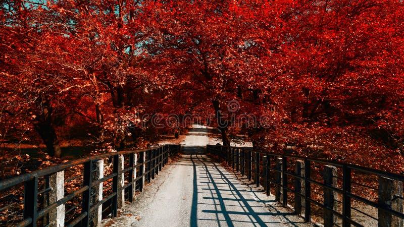 Красный мост дерева стоковые фотографии rf