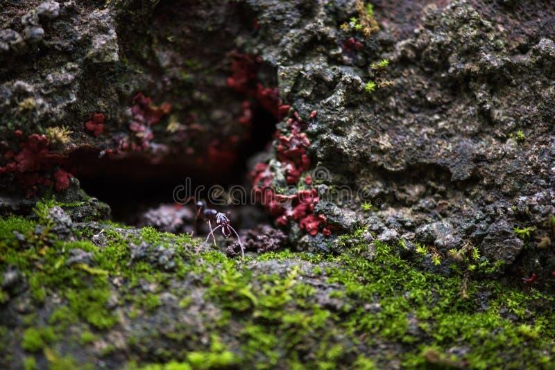 Красный муравей в пещере стоковое изображение