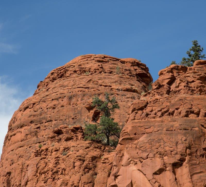Красный национальный парк утеса, Sedona, Аризона стоковая фотография
