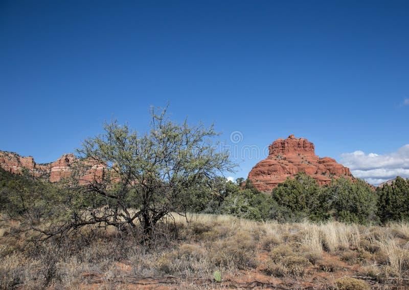 Красный национальный парк утеса, Sedona, Аризона стоковые изображения rf
