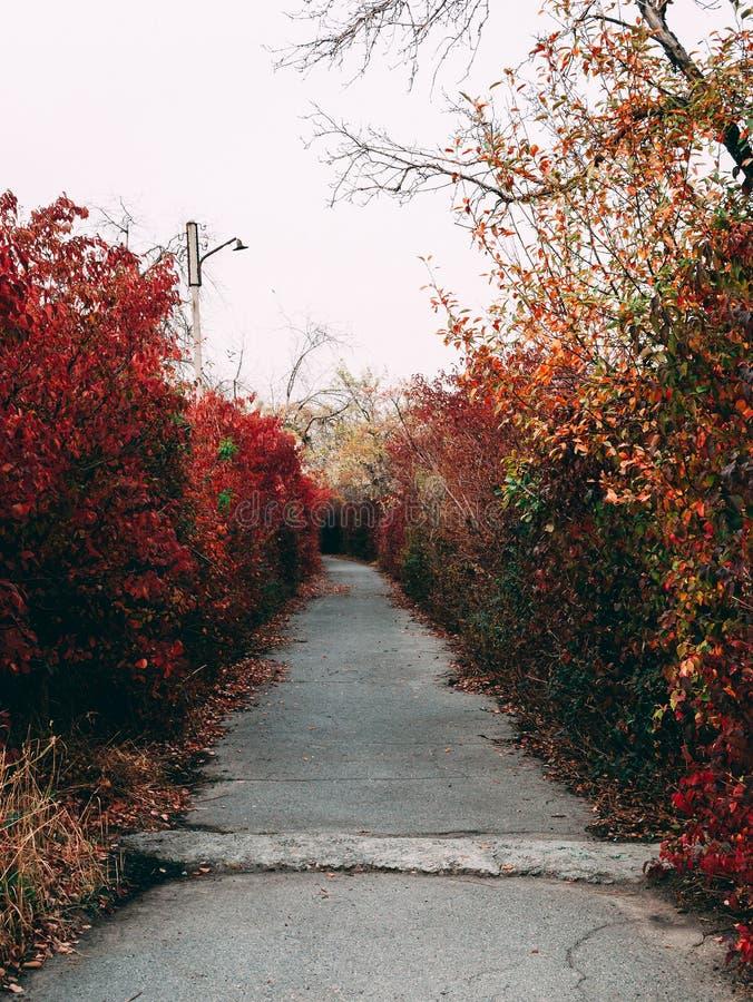Красный переулок стоковые фотографии rf
