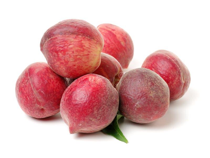 Красный персик стоковые изображения rf