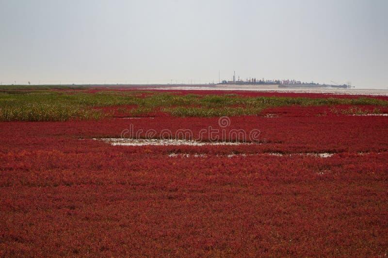 Красный пляж Panjin в Ляонине, Китае стоковые изображения rf