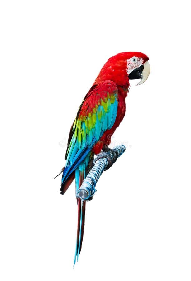 Красный попыгай стоковая фотография