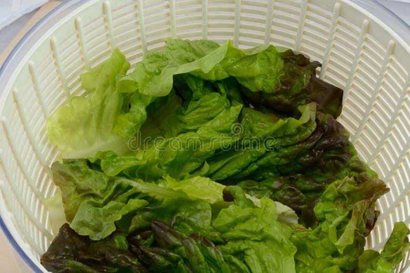Красный салат лист стоковые изображения rf