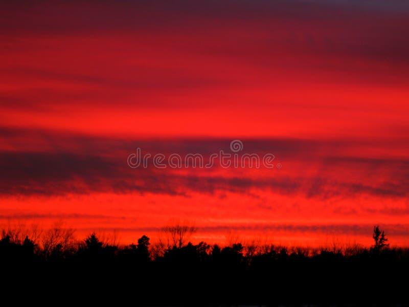 Красный силуэт дерева захода солнца стоковые изображения
