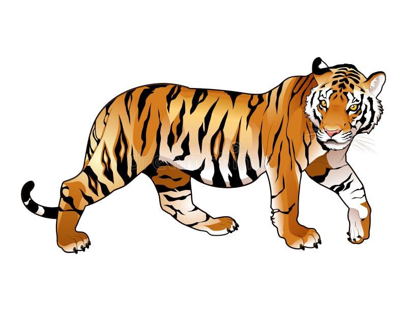 Красный тигр. иллюстрация вектора
