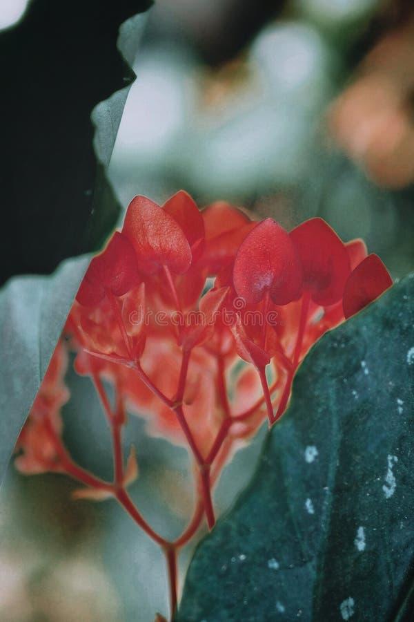 Красный цветок в парке стоковое фото rf