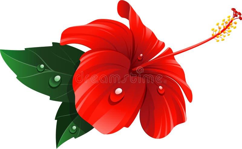 Красный цветок гибискуса иллюстрация вектора