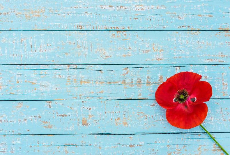 Красный цветок мака на голубой деревянной предпосылке на день памяти погибших в первую и вторую мировые войны с космосом экземпля стоковая фотография rf