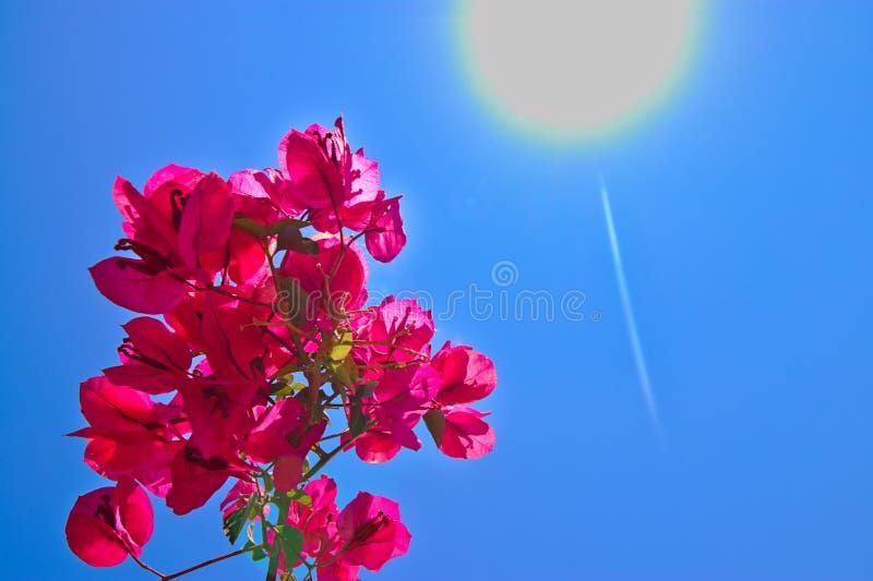 красный цветок с голубым небом и солнцем стоковые фото
