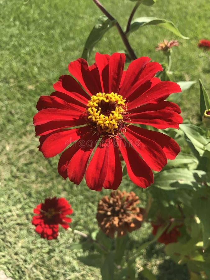 Фото цветка с красным центром 86