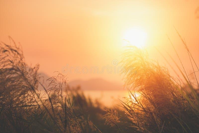 Красный цветок травы около воды с заходом солнца и горой назад стоковое изображение